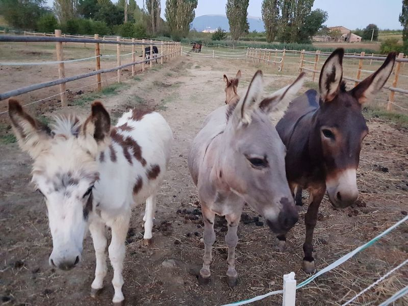 Italy🇮🇹 Umbria Asinelli Donkey Terapy Factory Tree Agriculture Rural Scene Sky