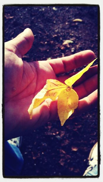 EyeEm Best Shots - Autumn / Fall Eyembestpics EyeEm Nature Lover Autumn Leaf