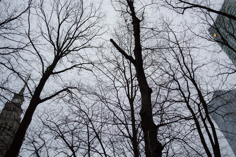 Poland Warsaw Europe Bare Tree Tree Branch Low Angle View Sky Plant No People Nature Trunk Tree Trunk Outdoors Silhouette Tranquility Day Forest Beauty In Nature Spooky Winter Backgrounds Tree Canopy