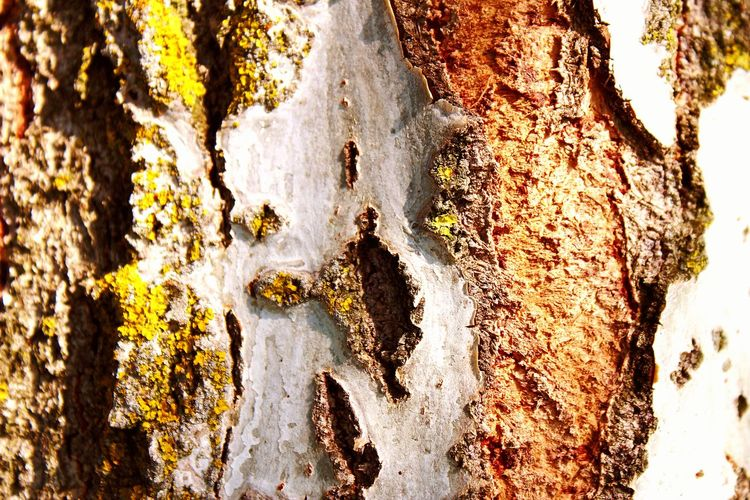 Bark Outdoors