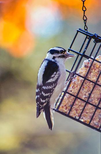 Close-up of bird perching on metal feeder