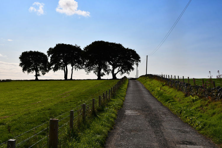 Scotland Treelined Trees Cloud - Sky Day Diminishing Perspective Direction Environment Field Grass Growth Land Landscape Nature No People Oak Tree Outdoors Plant Road Sky The Way Forward Tranquil Scene Tranquility Transportation Tree