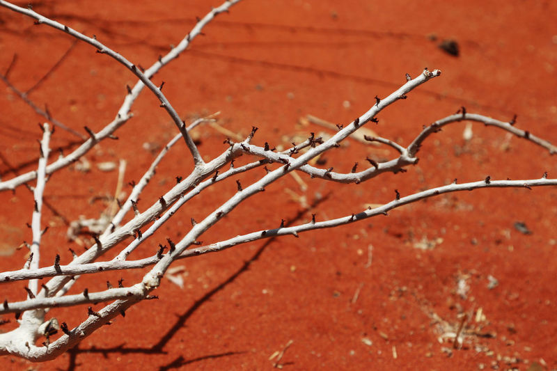 Close-up of red barbed wire fence during winter