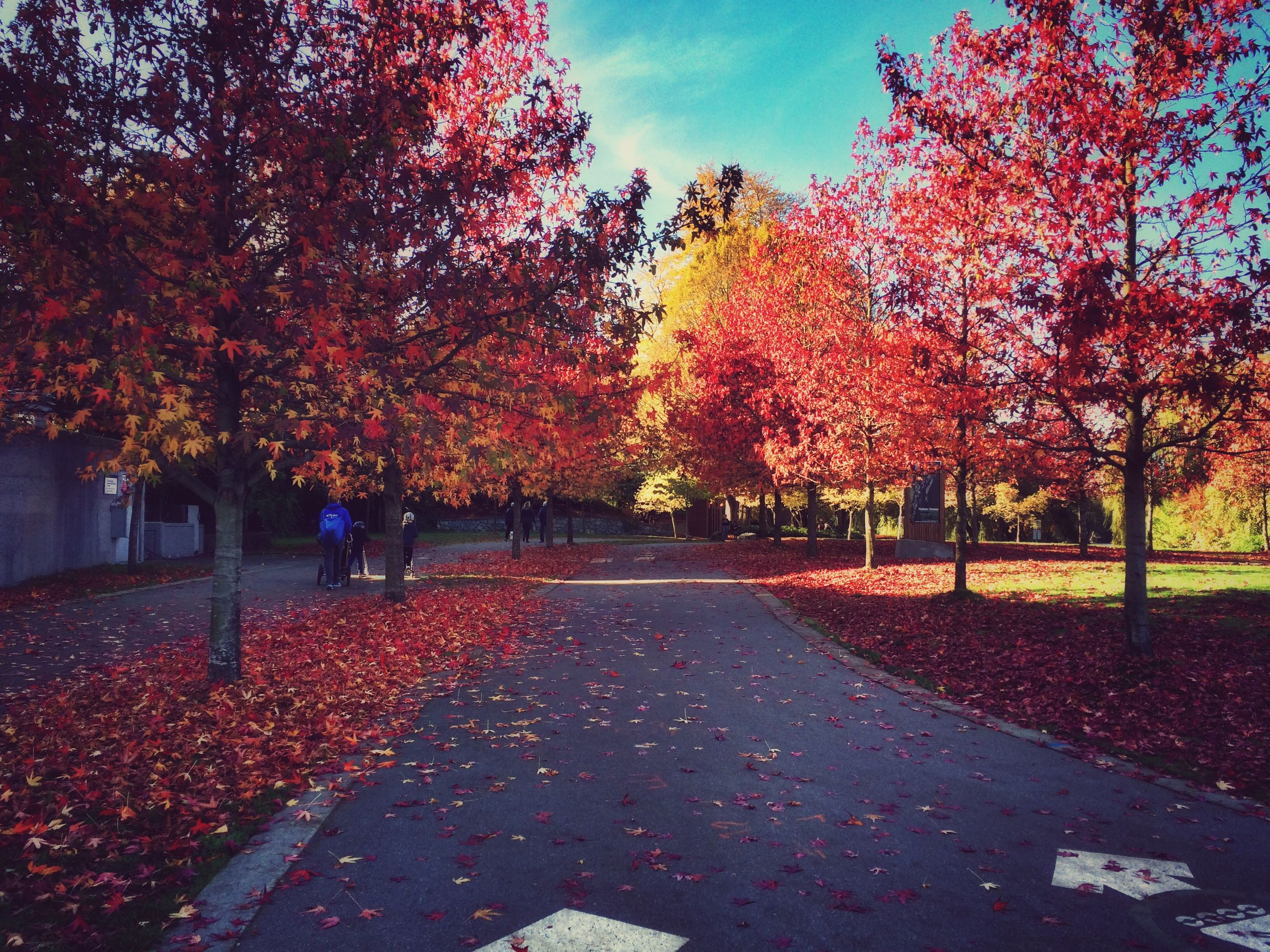 autumn, change, tree, season, the way forward, orange color, nature, leaf, sky, road, beauty in nature, diminishing perspective, park - man made space, tranquility, growth, street, footpath, branch, fallen, treelined