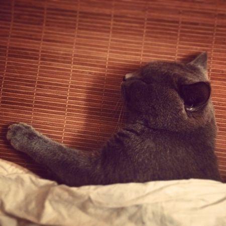 Sleeping stupid Lazy Cat😻