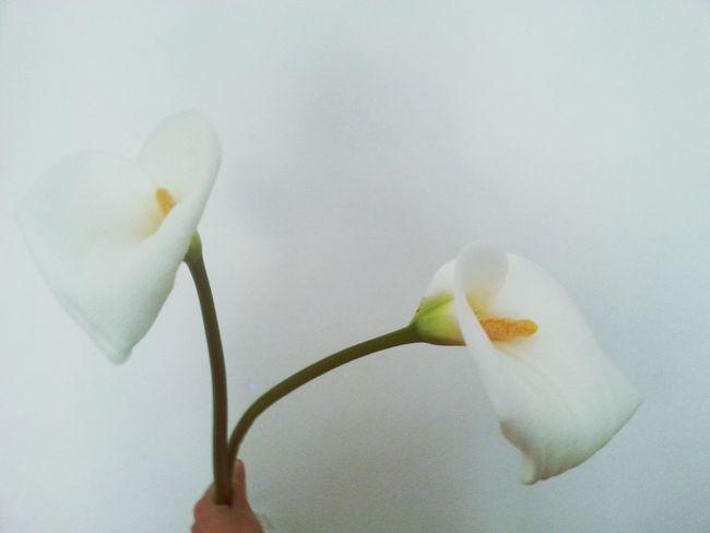 Thanks Daddy Flowers White Calle Beautiful OpenEdit Make Magic Happen Happiness Love Parete