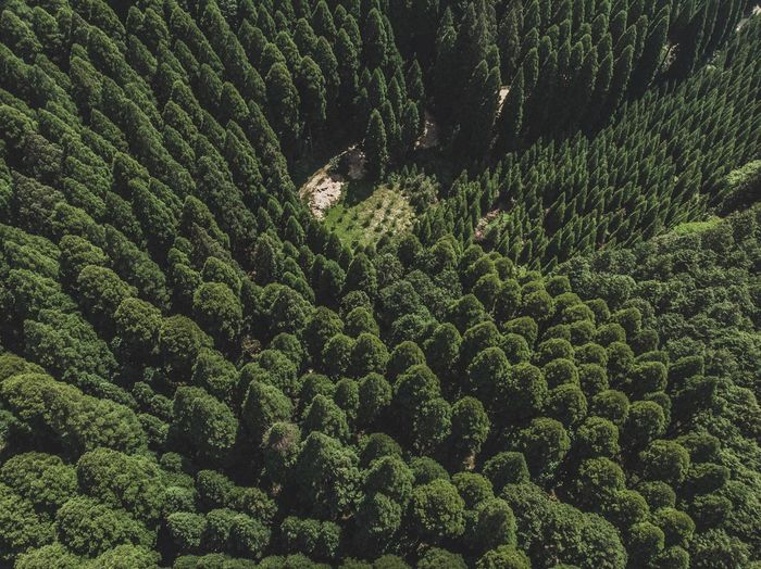 Japan Photography Japan Drone  Dronephotography Growth Green Color Plant Full Frame Beauty In Nature No People Tree Backgrounds Land Scenics - Nature High Angle View Landscape Foliage Lush Foliage Sunlight Outdoors Nature Tranquility Day Field