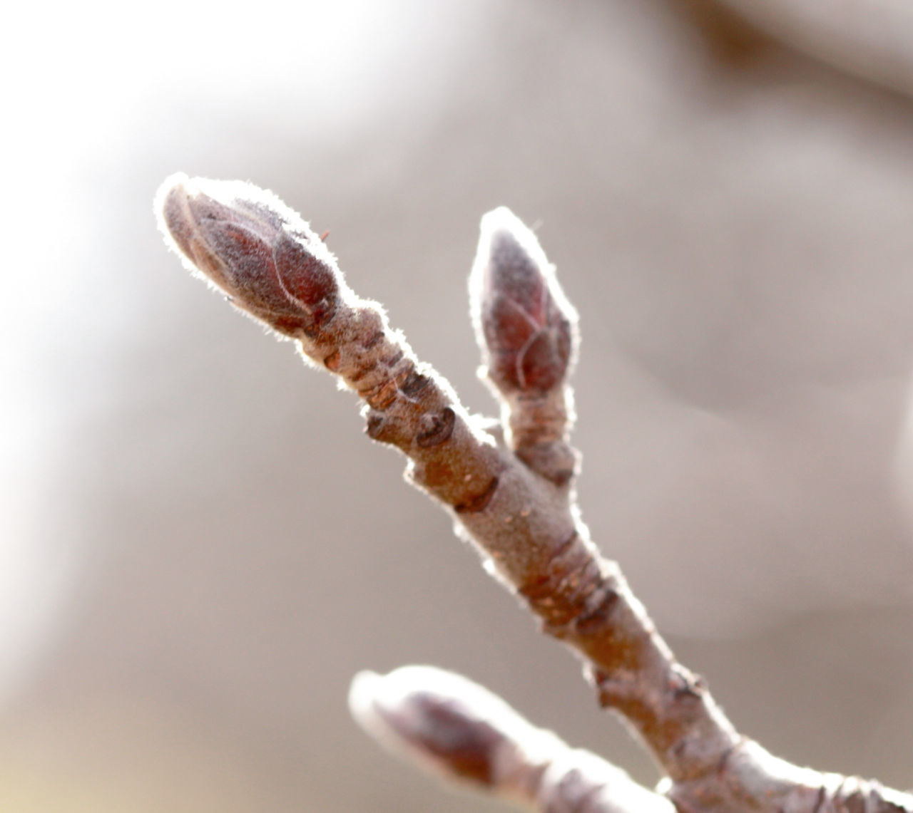 nature, close-up, day, growth, outdoors, no people, plant, focus on foreground, beauty in nature, fragility