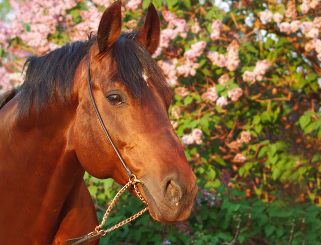 Animal Themes Brown Close-up Day Domestic Animals Field Flower Grass Horse Livestock Mammal Nature No People One Animal Outdoors Tree