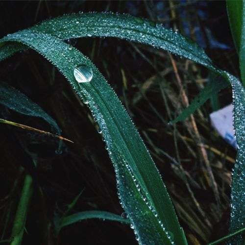 Dewy Iphonephotography IPhoneography IPhone Iphone6plus Iphonography Dew Dew Drops Morning Dew Morning Fresh