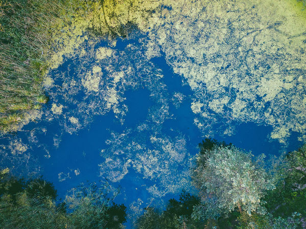 Swamp Aerial Shot DJI X Eyeem Drone  Swamp Aerial View Beauty In Nature Blue Day Full Frame Growth High Angle View Idyllic Land Mavic Mavic Pro Nature No People Outdoors Plant Scenics - Nature Sea Sky Tranquil Scene Tranquility Tree Water