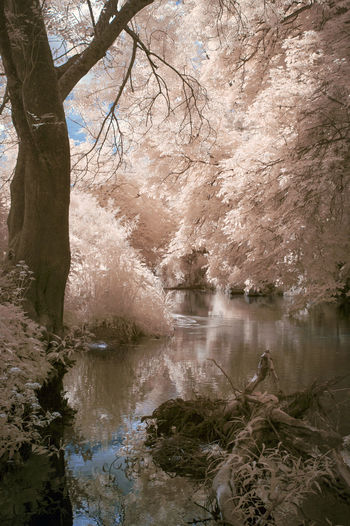 Abstract Beauty In Nature Box Hill Colour Different Forest Infrared Infrared Photo Infrared Photography IR IR Photo Ir Photography Nature Nature Nature Photography Nature_collection Naturelovers No People Photography River Scenics Tranquil Scene Tranquility Tree Water Perspectives On Nature Summer Exploratorium