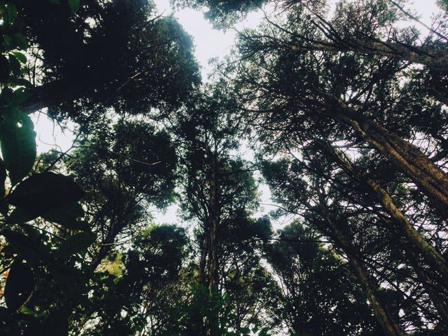 Trees Tall Look Up Pretty Beauty Nature Brown Green Forest Leaves Quite Peace Light Sky Bosque De La Hoja Costa Rica