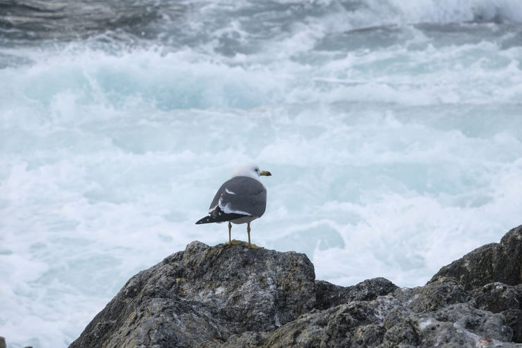 Bird perching on rock by sea
