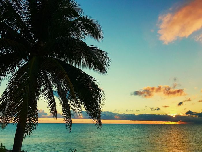 Sunset Palm Tree Sea Tranquil Scene Beauty In Nature Sunset Water Beach Sky Nature Turks And Caicos First Eyeem Photo
