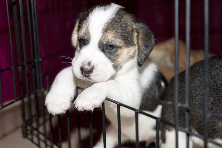 Close-up of puppy in cage