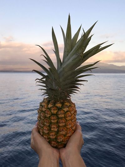 Sea One Person Pineapple Human Hand Tropical Climate Fruit Real People Human Body Part Nature Beauty In Nature Sky Holding Horizon Over Water Honolulu  Beach Food Water Freshness Lifestyles Outdoors