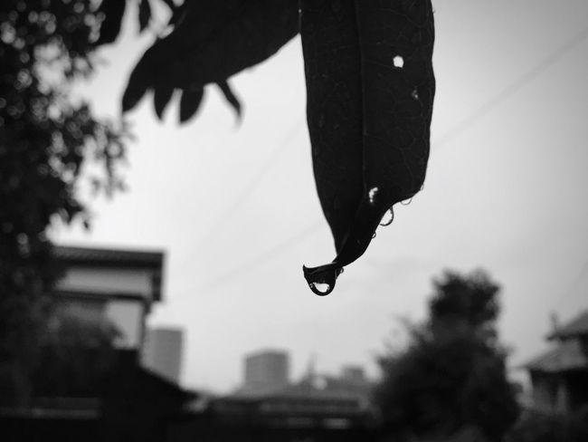 突然の雨にただ濡れるしかなく立ち尽くすしかなく。 Monochrome 雨粒 水滴 Rain Raindrops Monochrome Photography