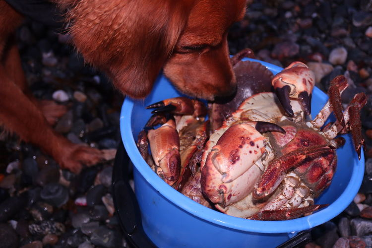 Close-up of dog sniffing crabs in a bucket