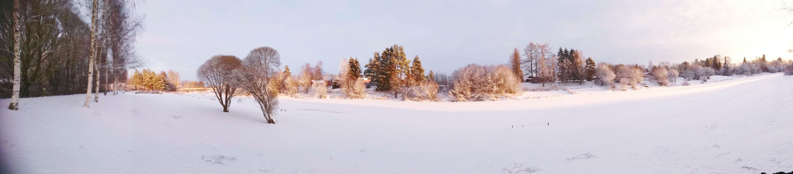 """Last winterfrom my """"place"""" Cold TemperatureEyeEm Selects Snow Winter Frozen Nature Panoramic EyeEmNewHere Eyes Closed  Sonyz3 Travelling Photography Pinaceae Pine Tree Forest Tree Wrapped Snowcapped Mountain Polar Climate Fog Snowing Mountain Outdoors Cloud - Sky Tree Area Beauty"""
