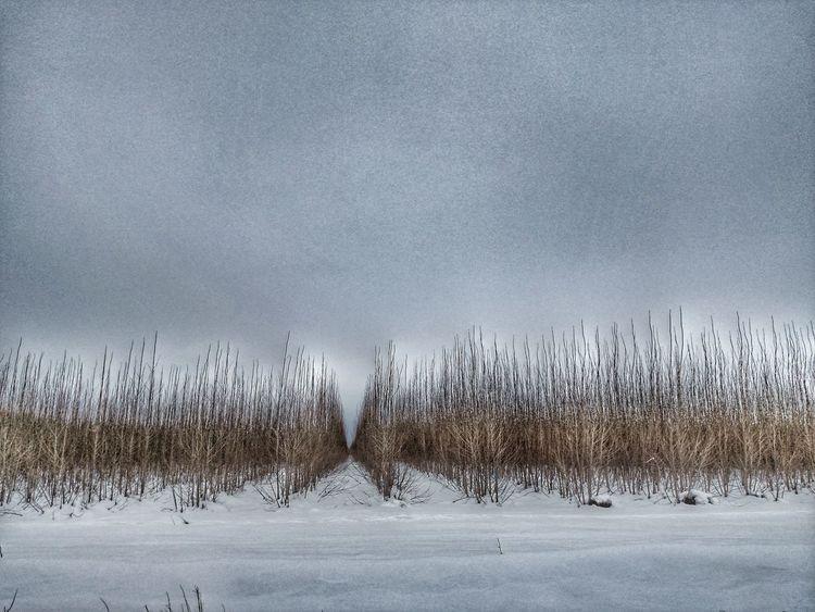 Layers of winter. JustIdaho Northidaho Kingdom Of The Blue Shed Forest Winter Solitude Coeurdalene Imagesspeaklouder