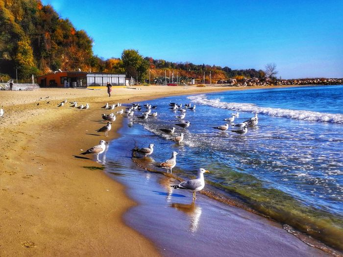 Birds Water