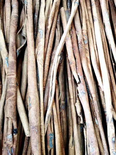 Full frame shot of bamboo on tree trunk