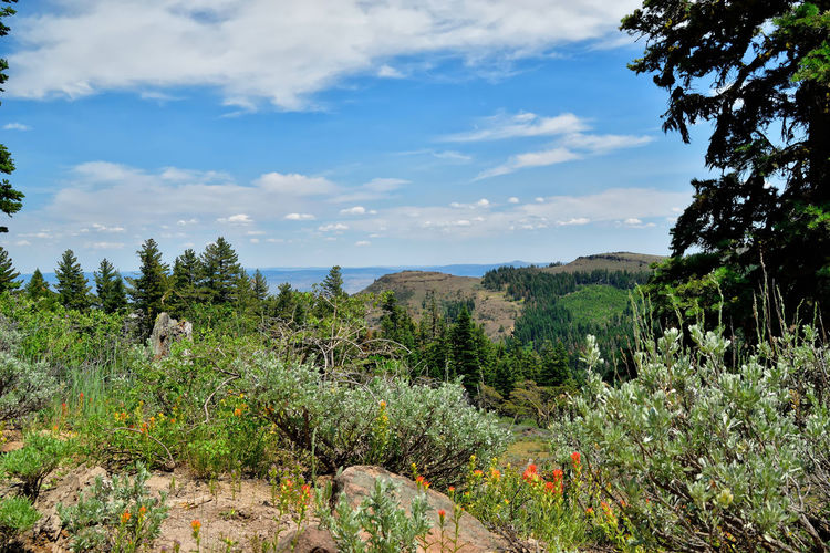 View to the east from the Warner Mountains in Modoc County, California. Beauty In Nature Cloud - Sky Day Evergreen Flowers Grass Growth Landscape Mountain Nature No People Orange Color Outdoors Pine Tree Plant Scenics Sky Tranquil Scene Tranquility Tree Yellow