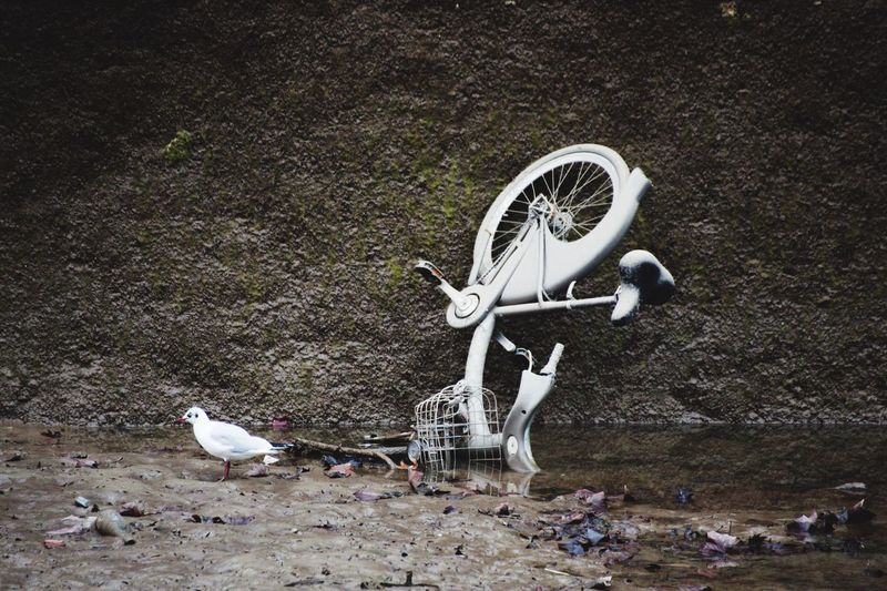 Side view of a bird by abandoned bicycle
