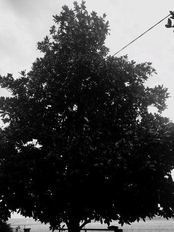 Tree Nature Day Non-urban Scene