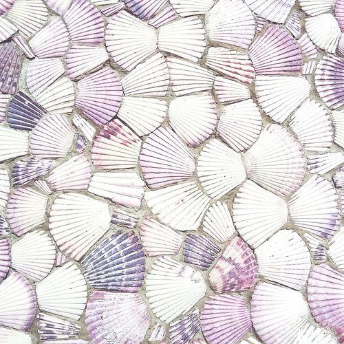 Pectinidos Textured  Outdoors Conchitas