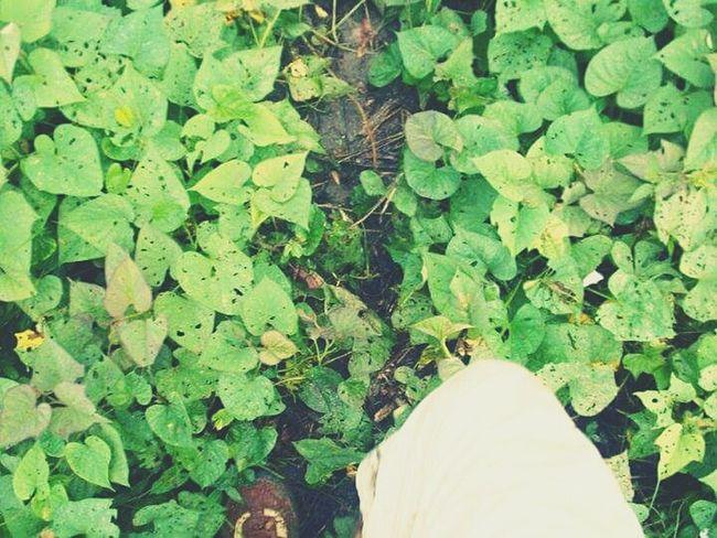 Naturaleza Natural Beauty Caminar Verde
