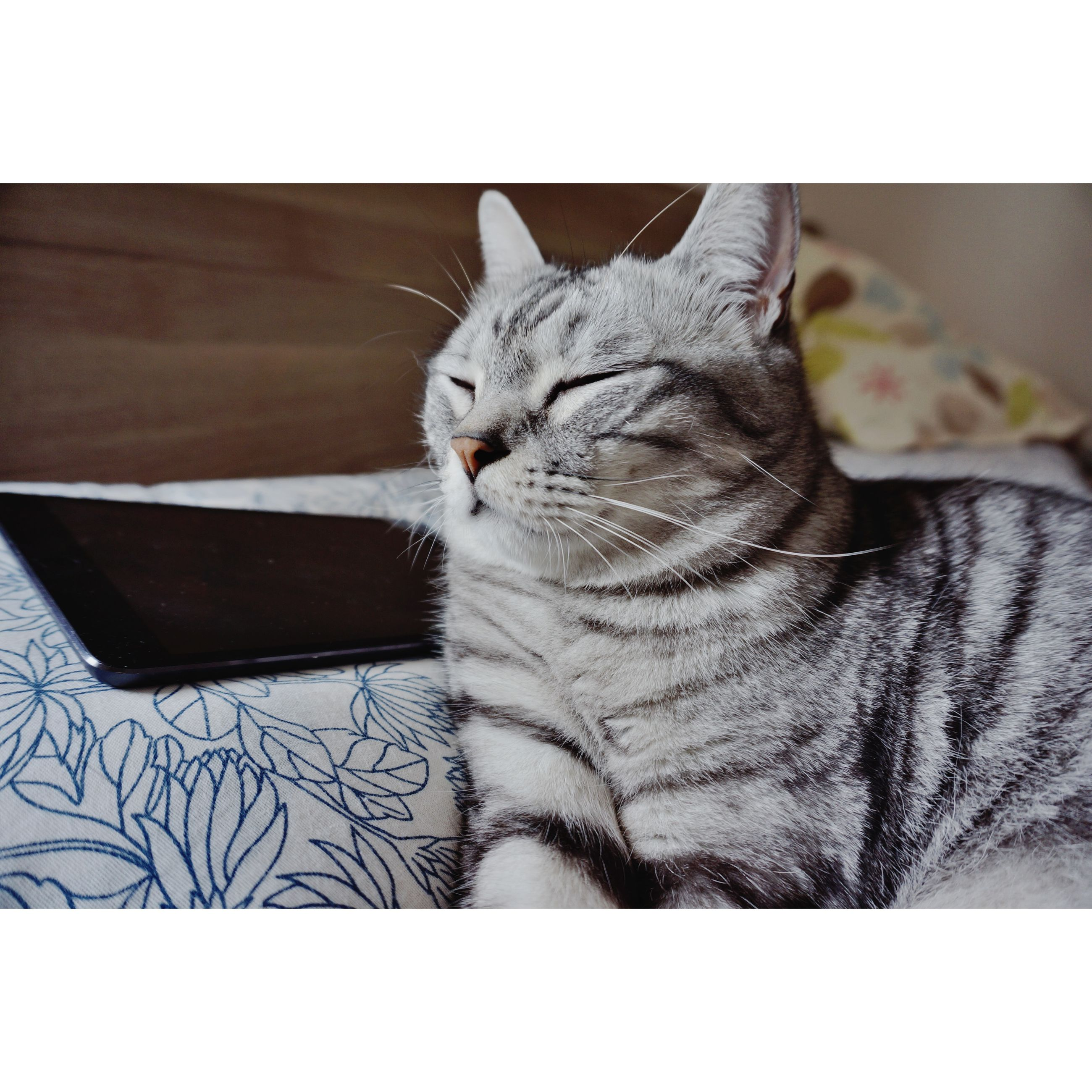 pets, domestic animals, domestic cat, cat, one animal, animal themes, mammal, indoors, feline, relaxation, transfer print, resting, auto post production filter, lying down, whisker, sleeping, bed, home interior, sofa, close-up