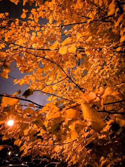 Autumn Season  Tree Autumn Night Moscow Reutov