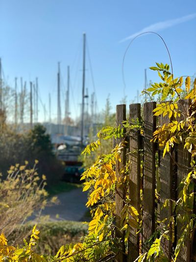 Boats Harbor Plant Sky Nature Growth Day No People Sunlight Clear Sky Outdoors Tree Fence Water Flower