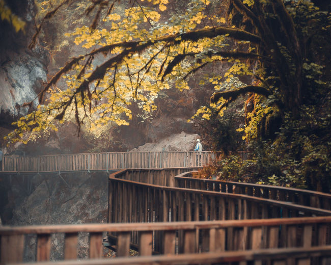 Mid distance of man standing on footbridge in forest