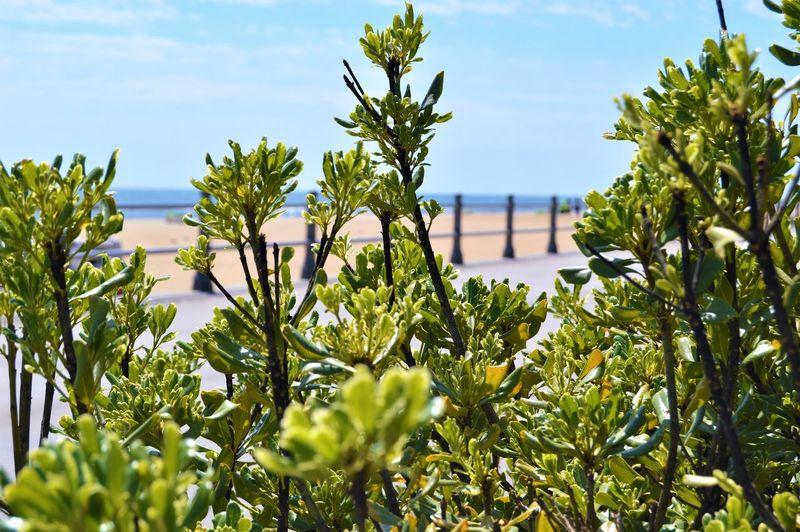 Boardwalk Plants Green Color Nature Plant Plants Railing Virginia Beach Beach Boardwalk Boardwalk Plants Boardwalk Railing Close-up Green Leaves Leaves No People Ocean Outdoors Sand Sky