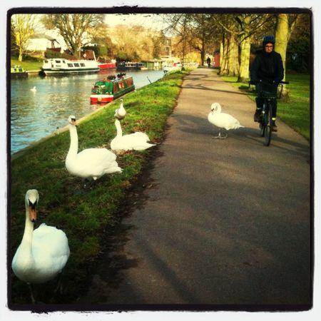 This Is The Swan's Invasion!