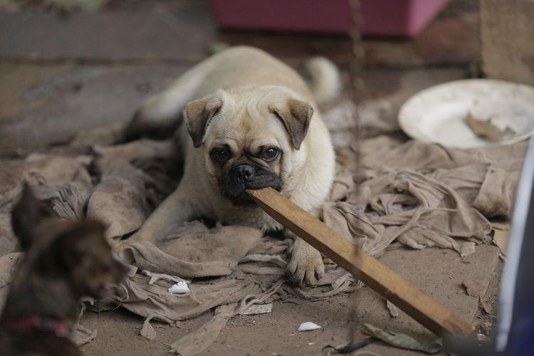 Portrait of puppy resting on floor