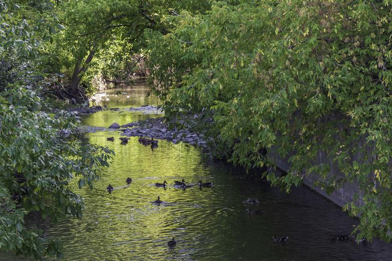 Ducks chilling