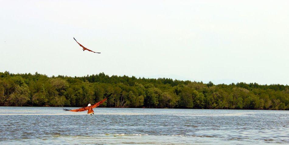 Taking Photos Photography Landscape Nature Ocean Hawks Langkawi Malaysia