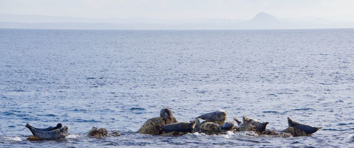 Seals on rock formation in sea against sky