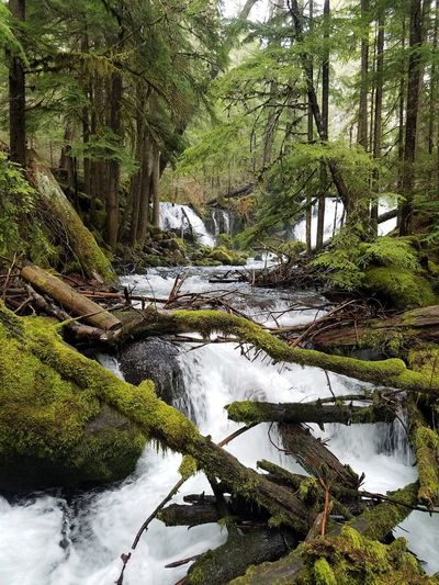 Forest Photography Southern Oregon Rogue River River Life Tree Life Waterfalls Tree Water Growing