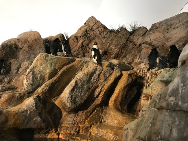The Purist Puffins Zoo Animals  Rockstars No People Mother Vs Nature Man Made Object Architecture Animal Themes EyeEm Animal Lover