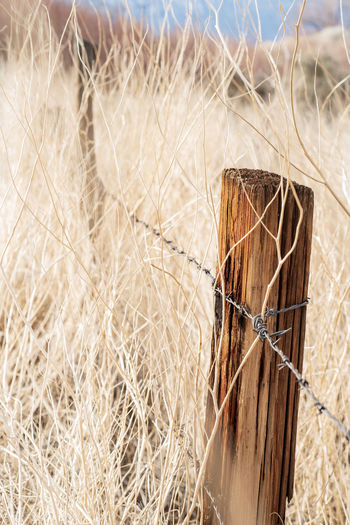 autumn nature scene with rural wooden fence post and barbed wire in tall dry grass, California, USA Close-up Nature No People Protection Security Safety Day Selective Focus Plant Fence Wire Focus On Foreground Barrier Brown Outdoors Environment Domestic Autumn colors Rural America Dry Grass California
