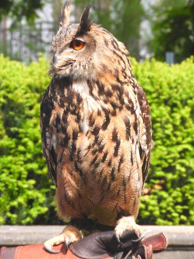 An owl is