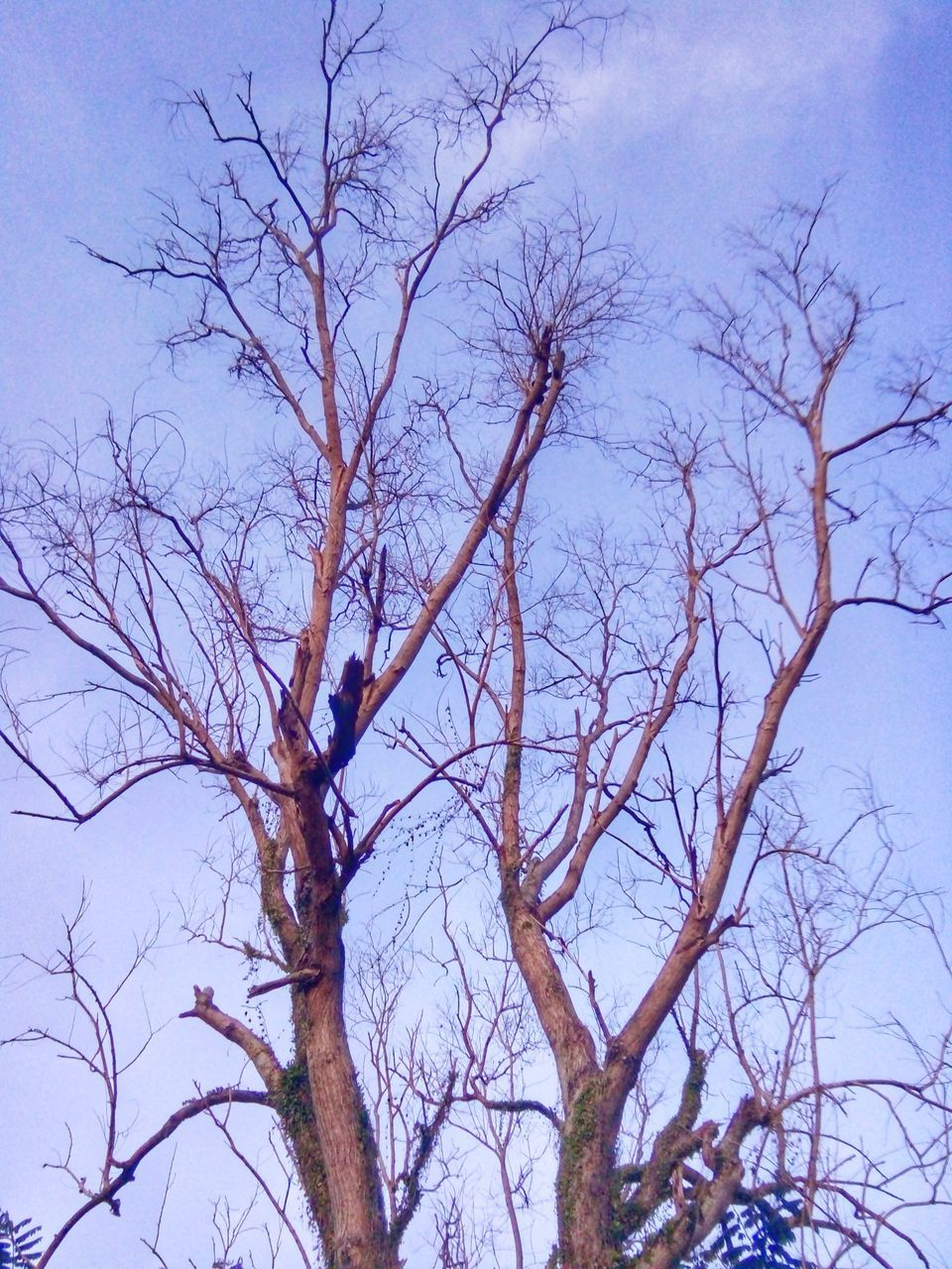 bare tree, branch, tree, nature, low angle view, outdoors, no people, day, beauty in nature, sky, tranquility
