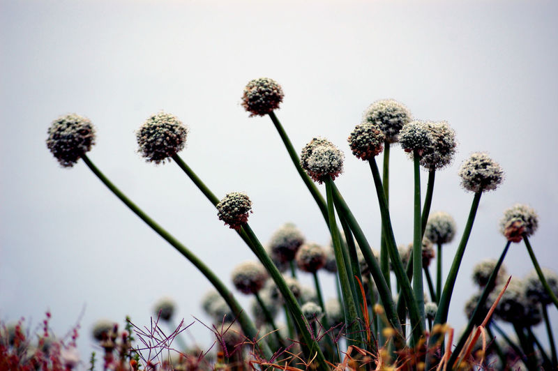 Low Angle View Beauty In Nature Blue Close-up Day Field Flower Flower Head Flowering Plant Focus On Foreground Fragility Freshness Growth Inflorescence Nature No People Outdoors Plant Plant Stem Purple Selective Focus Softness Springtime Vulnerability  Wildflower