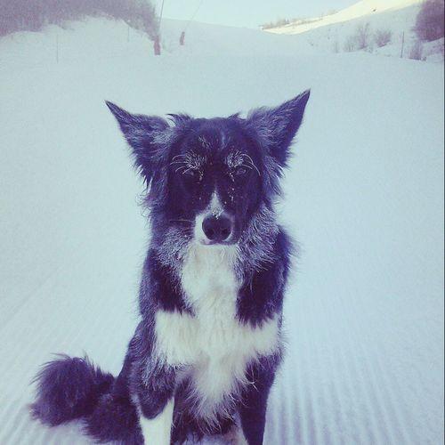 Border Collie; Fresh Dog