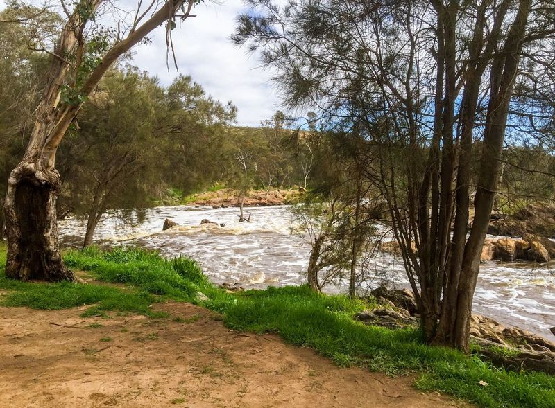 Bell Rapids Rushing Water Peaceful Scenics Overcast Rock Formation Geology Trees Rock Swan Valley  Australia Landscape Outdoors Riverbank Water Western Australia Bell Rapids Swan River Nature Rapids River Cloudy Hiking View Tranquil Scene Foamy Hiking